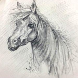 horse_sketch